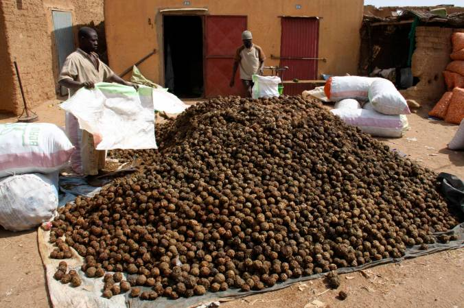 Onion balls in Bandiagara, Dogon Country, Mali, Africa