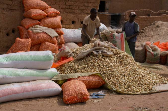 Onions in Bandiagara, Dogon Country, Mali, Africa