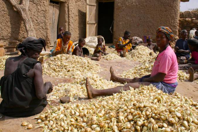 Crushing onions, Djiguibombo, Dogon Country, Mali, Africa