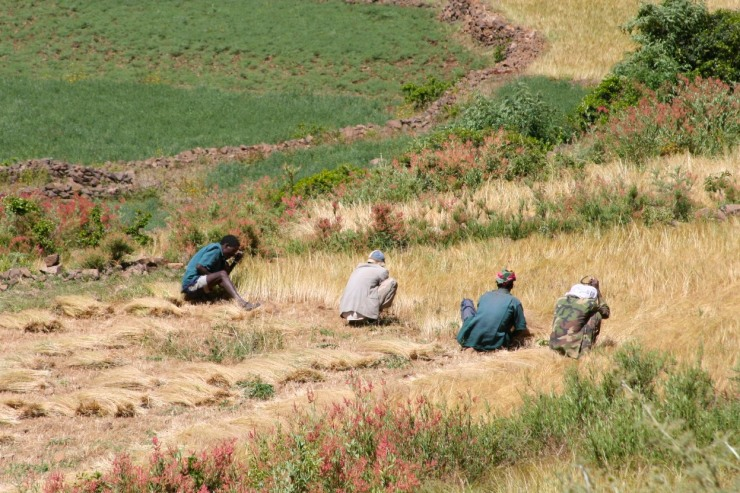 Men working in the fields, Axum, Ethiopia, Africa