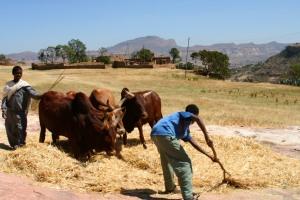 The village near Debre Damo Monastery, Ethiopia, Africa