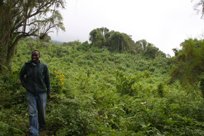 Volcanoes National Park, Rwanda, Africa