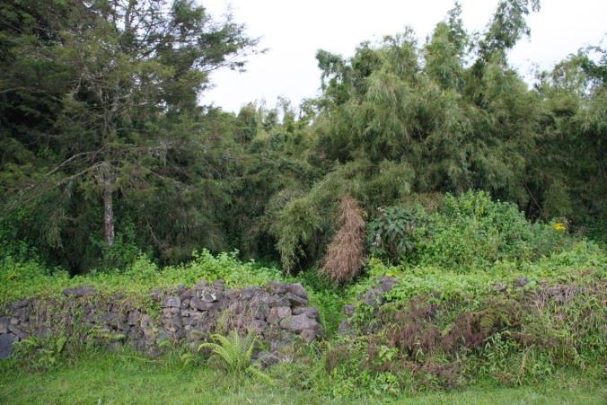 Entrance to Volcanoes National Park, Rwanda, Africa