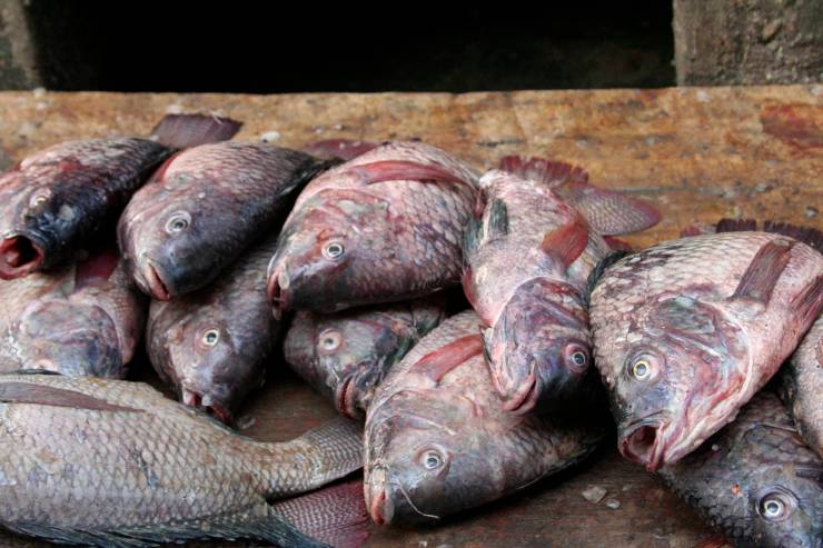 Fish, Owino Market, Kampala, Uganda, Africa