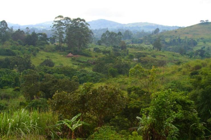 Kibale Forest National Park, Uganda, Africa