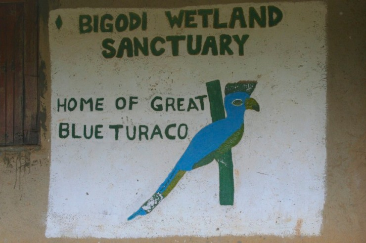 Bigodi Wetland Sanctuary, Kibale Forest National Park, Uganda, Africa
