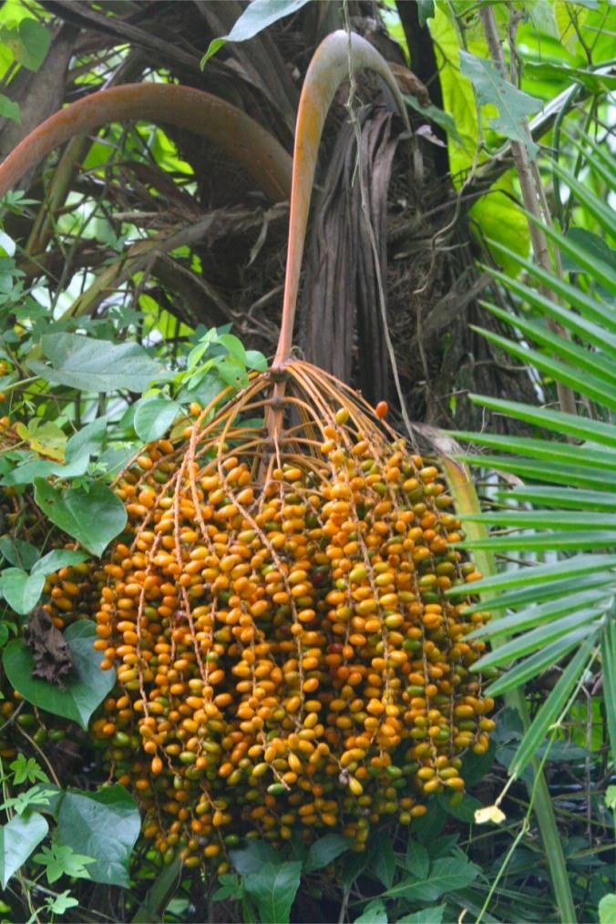 Fauna in Bigodi Wetland Sanctuary, Kibale Forest National Park, Uganda, Africa