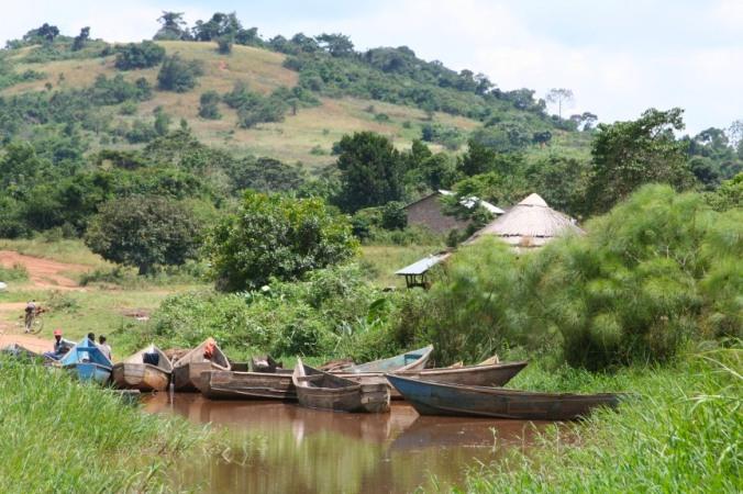 Mabamba Wetlands, Lake Victoria, Uganda, Africa