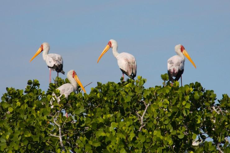 Birds en route to Ibo Island, Quirimbas Archipelago, Mozambique