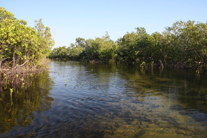 Mangroves en route to Quirimba Island, Quirimbas Archipelago, Mozambique, Africa
