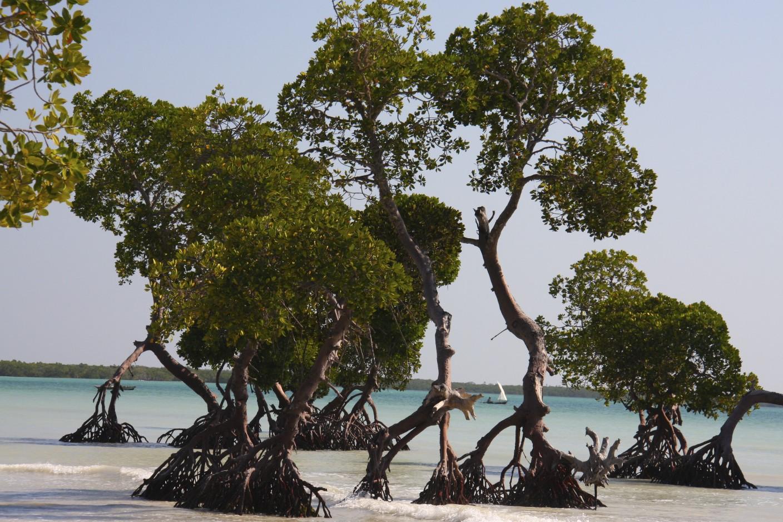 Island Paradise Charters New Port Richey Fl