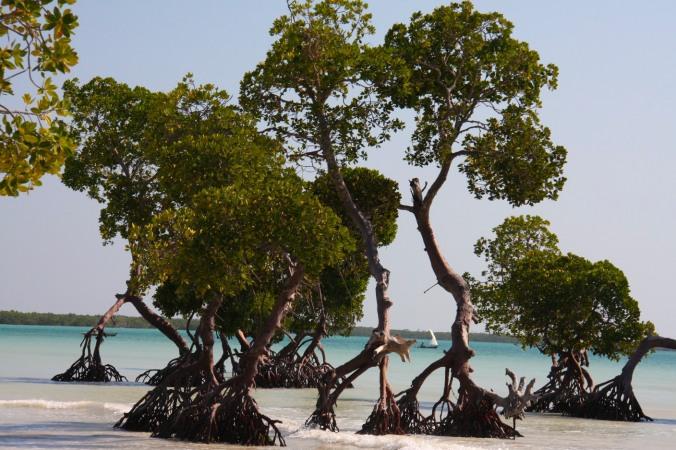 Mangrove and boat, Quirimba Island, Quirimbas Archipelago, Mozambique, Africa