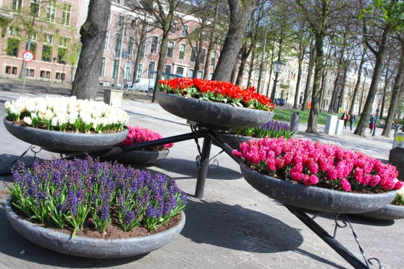 Flowers in bloom, The Hague, Netherlands