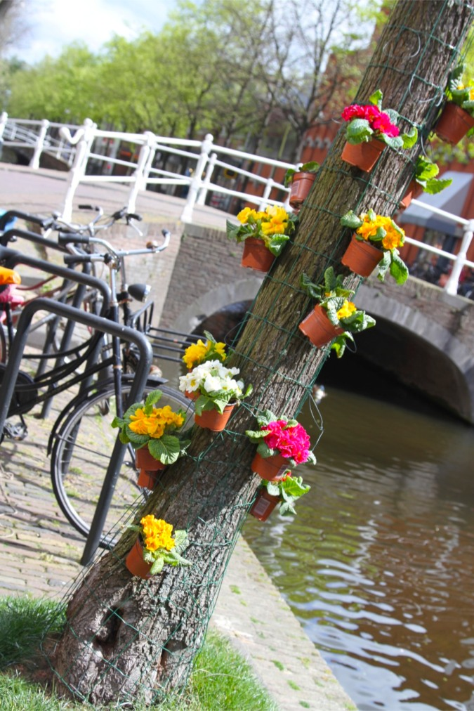 Plant pots and flowers, Delft, Netherlands