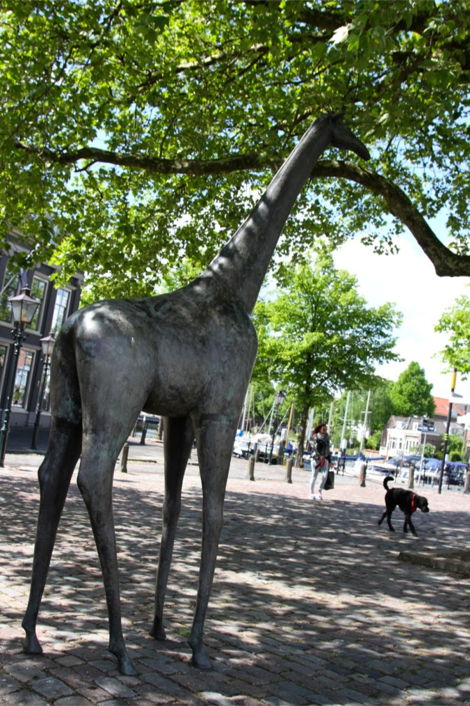 No idea why...a giraffe, Dordrecht, Netherlands