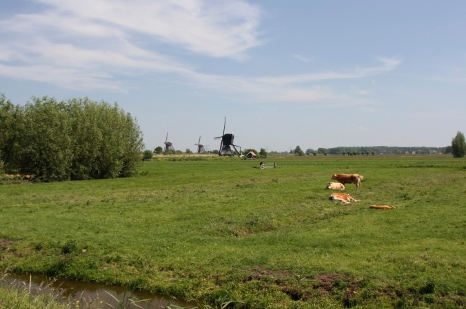 Rural landscape with cows and windmills, Kinderdijk, Netherlands