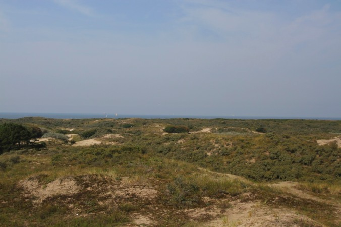 Meijendel Dunes, North Sea Coast, Netherlands