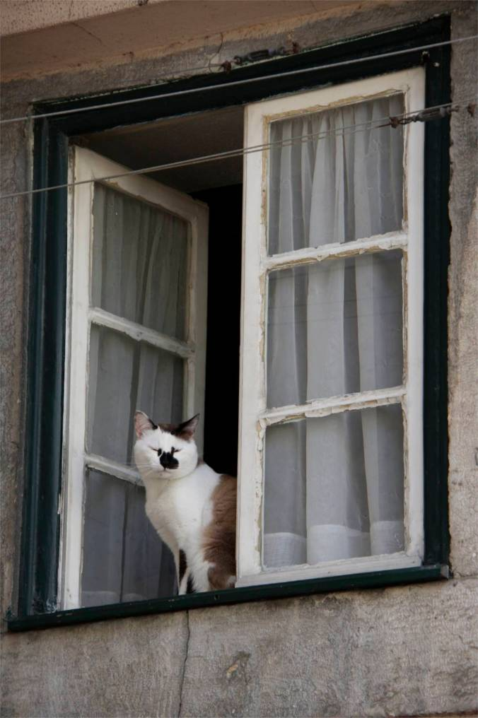 Cat on a window ledge, Lisbon, Portugal