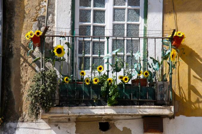 Flowers on a balcony, Lisbon, Portugal