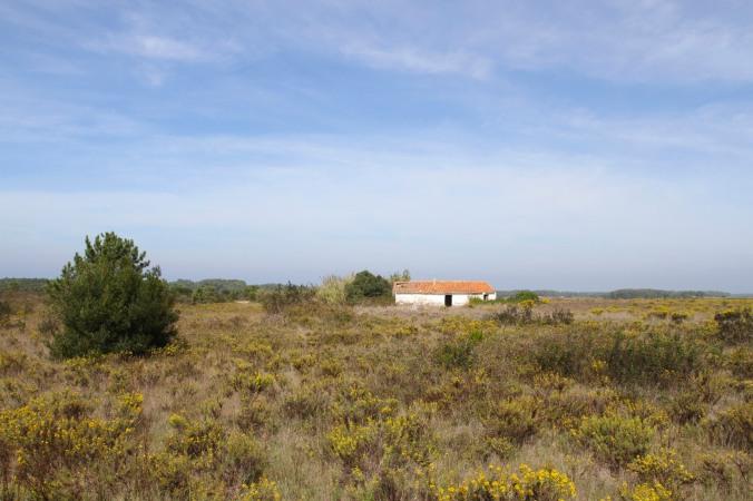 Road to Praia de Carreagem, Algarve, Portugal