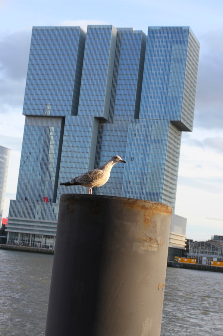 nhow hotel with seagull, Rotterdam, Netherlands