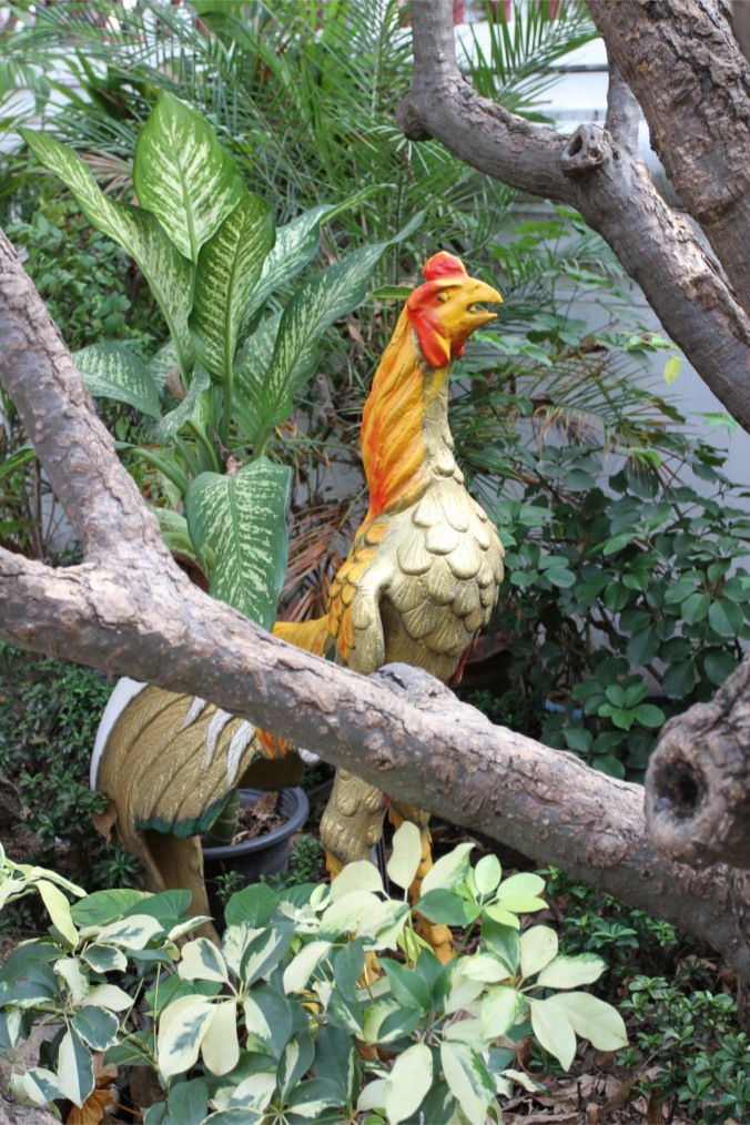 Strange chicken in a Buddhist temple garden, Bangkok, Thailand