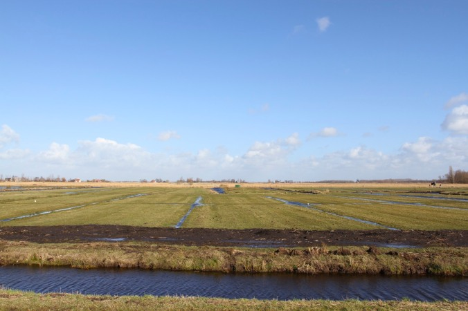 Polders near Zaanse Schans village, The Netherlands
