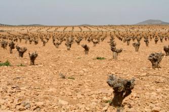 Landscape near Consuegra, Castilla-La Mancha, Spain