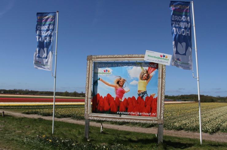 Hurrah, it's tulip season, Netherlands