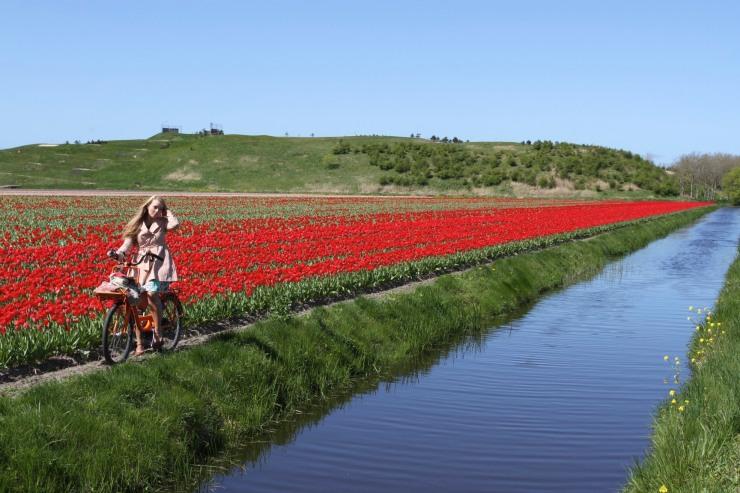 Tourist on bike poses next to tulips, Netherlands