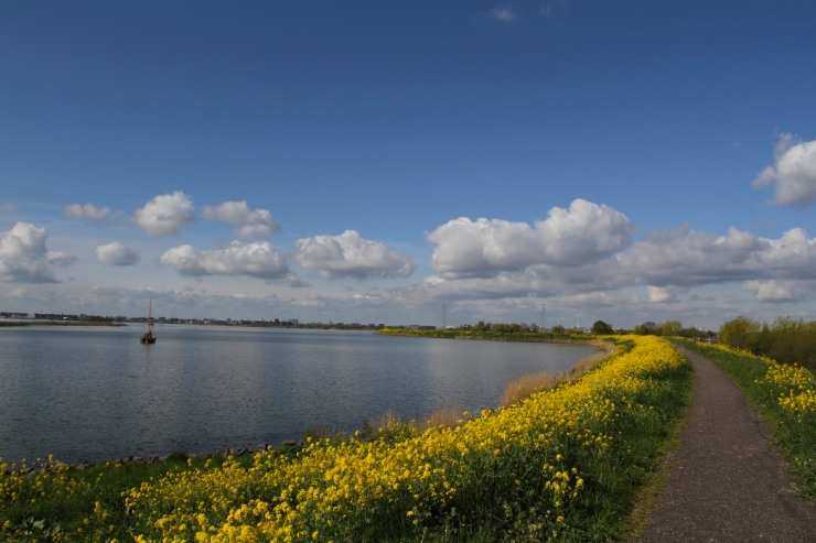 Cycle path along the IJsselmeer, Waterlands, Netherlands