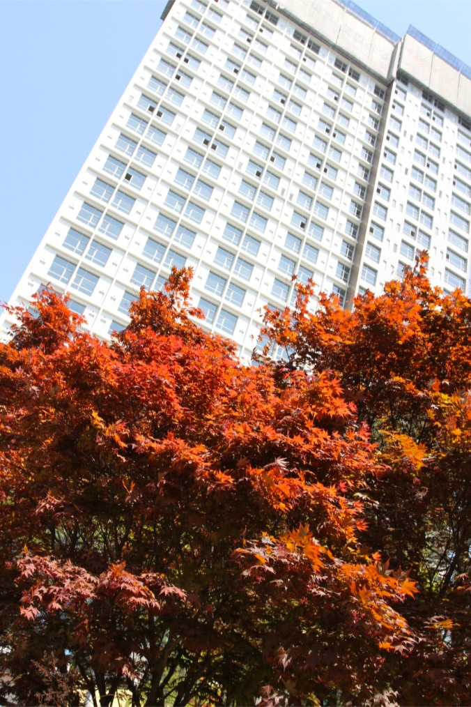 Tree, Daegu, Korea