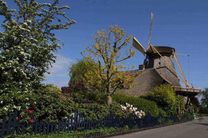 Windmills on the River Vecht, Weesp, Netherlands