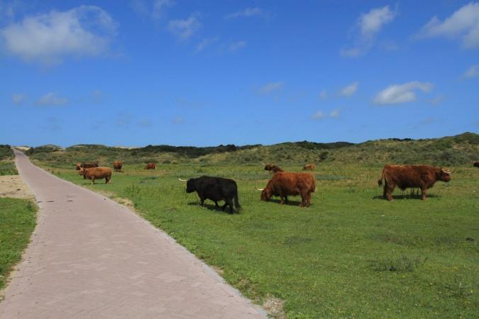Zuid-Kennemerland National Park, North Sea Coast, Netherlands