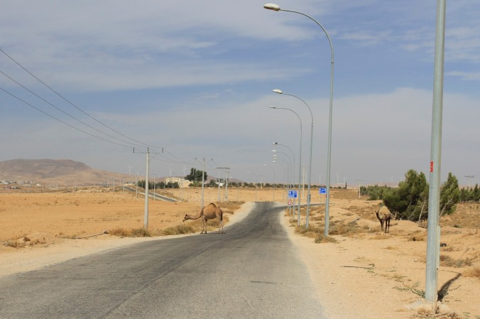 Jordan landscape with camels