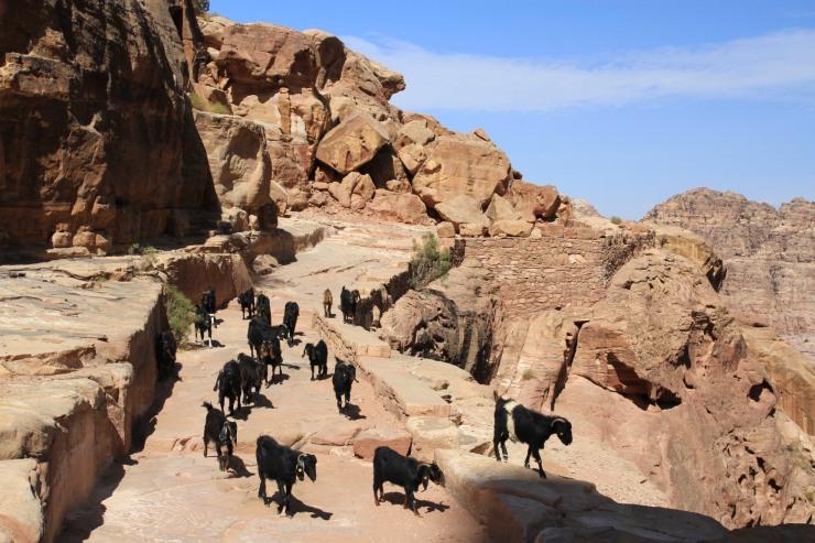 Goat assassins, Petra, Jordan