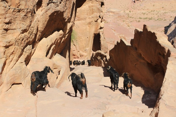 Goat assassins, Petra, Jordan