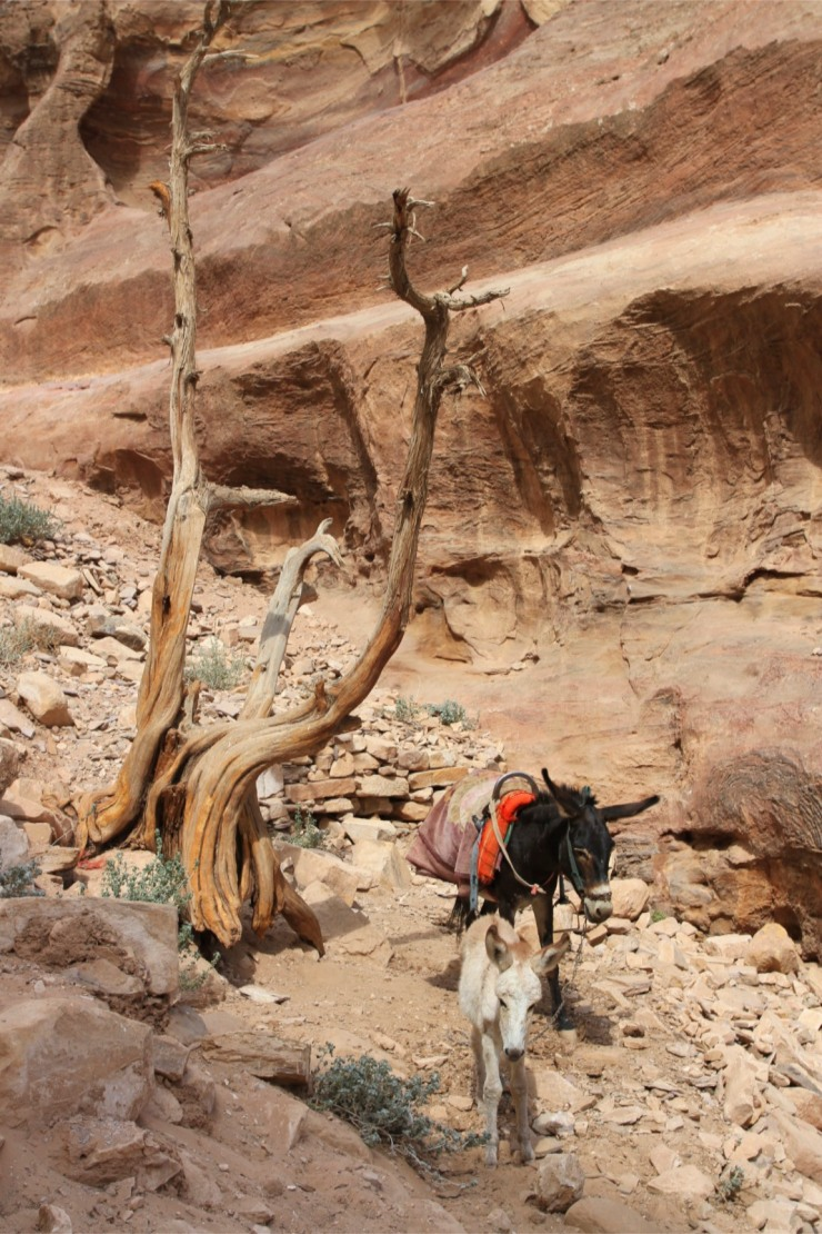 The route up to the Monastery or El Deir, Petra, Jordan