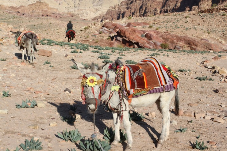 Donkey en route to the Royal Tombs, Petra, Jordan