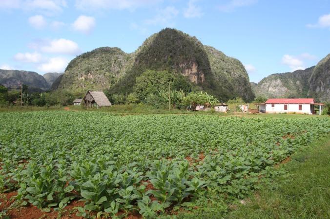Tobacco fields, Valle de Viñales, Cuba