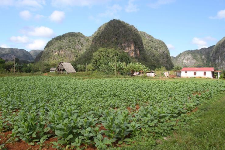 Tobacco fields, Vale de Viñales, Cuba