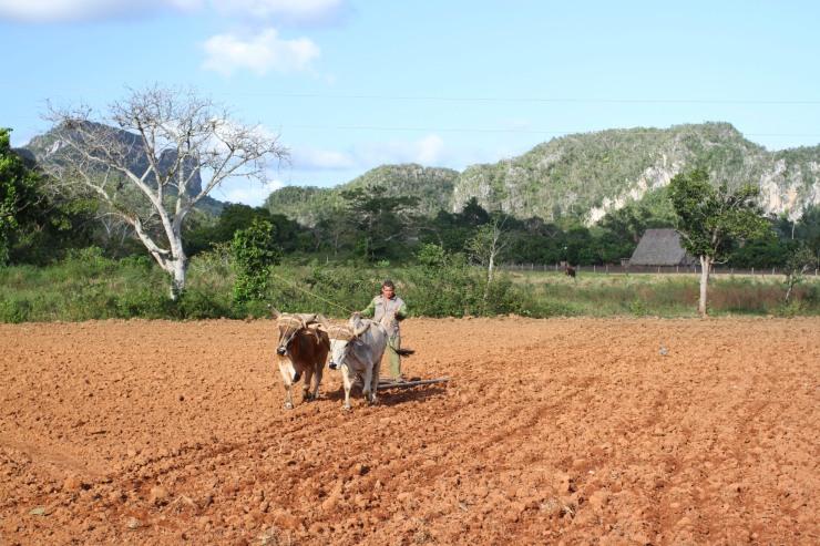 Vale de Vinales, Cuba