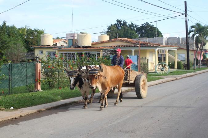 Ox cart, Viñales, Cuba