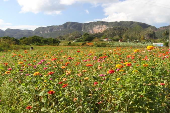 Flowers, Valle de Silencio, Vinales