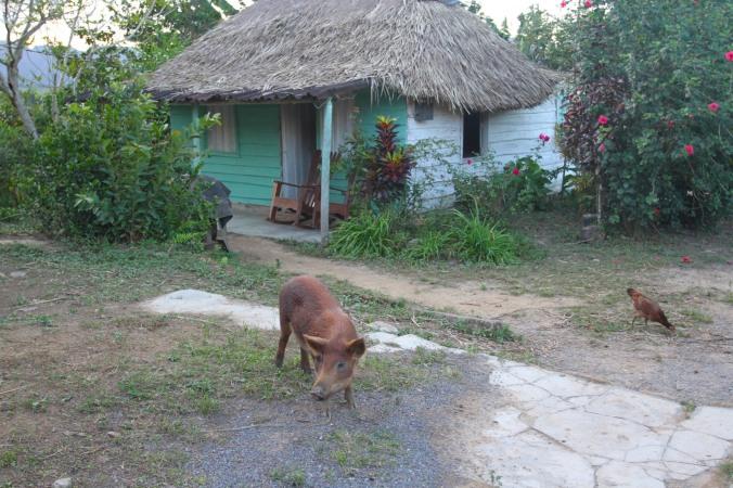 Pig, Valle de Silencio, Vinales