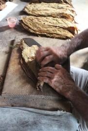 Cigar rolling, Robaina cigar plantation, Pinar del Rio, Cuba