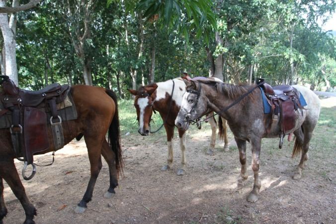 Our horses on the Finca la Guabina, Cuba