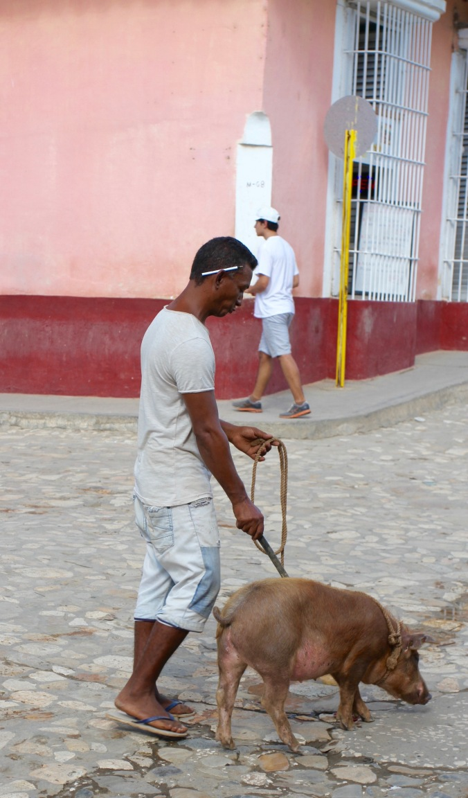 Man walking pig, Trinidad, Cuba