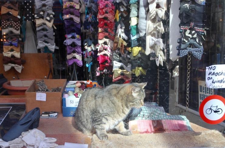 Cat in window, Amsterdam, Netherlands