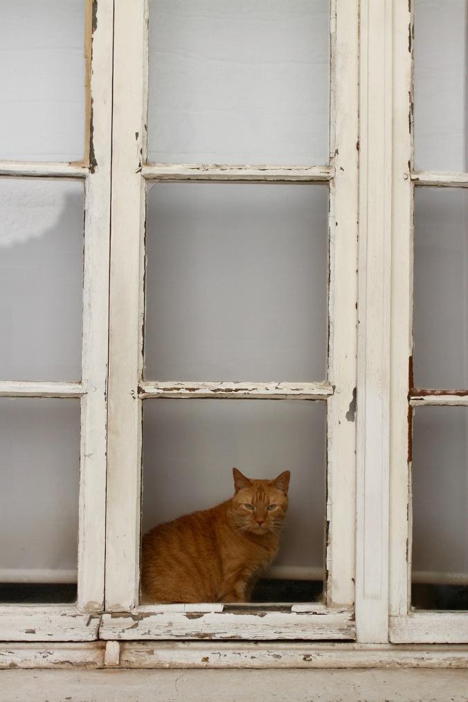 Grumpy cat in window, Arras, France